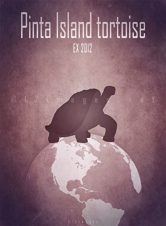 pinta island tortoise Lonesome George giant turtle Galápagos Ecuador Abingdon island Chelonoidis abingdonii recently extinct conservation biodiversity endemic species restoration