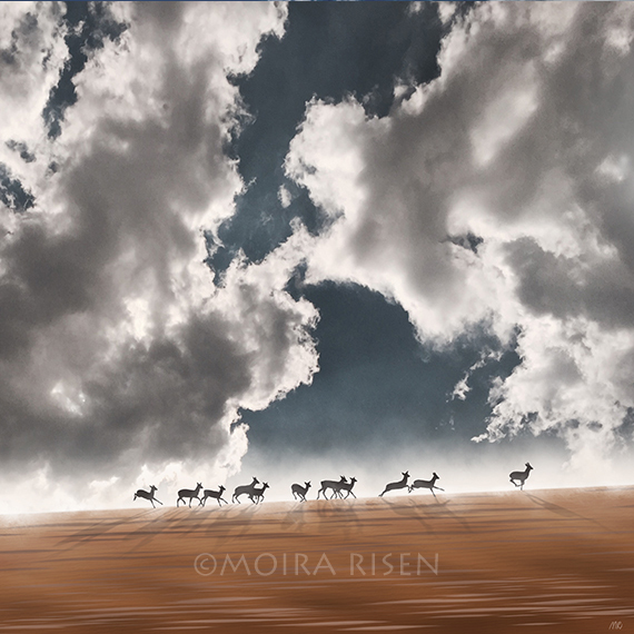 roe deer running silhouette brown fields wheat blue sky white clouds sun long shadows autumn october mist fog