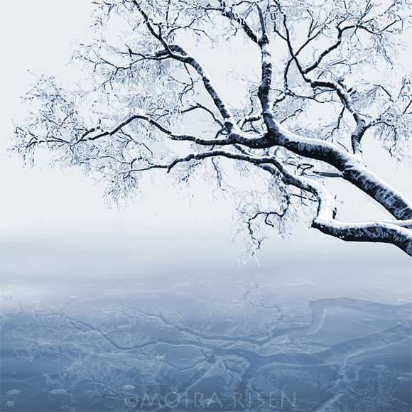 tree branch above lake river bank water weeping hanging reaching ice frost reflection winter snow frozen leaves
