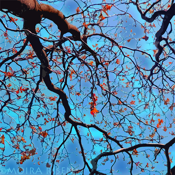 tree branches leaves canopy against blue sky falling autumn purple beautiful
