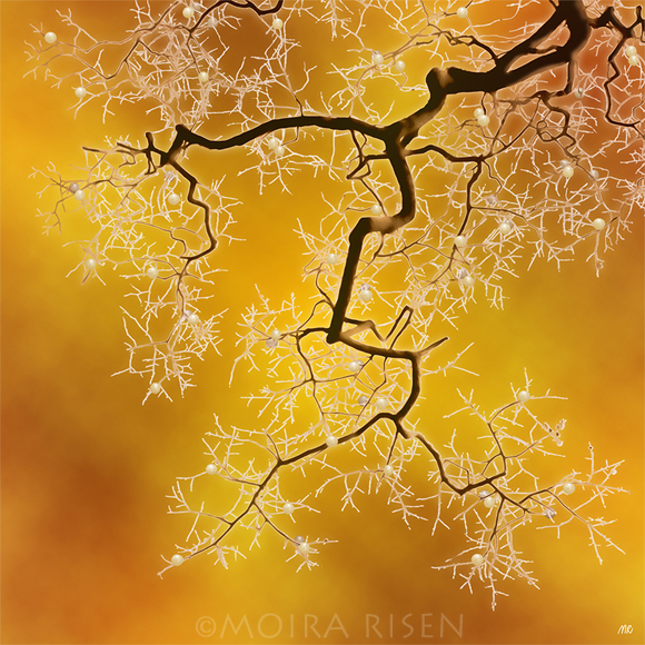 tree branch wild berries winter bare leafless orange yellow sky mist fog