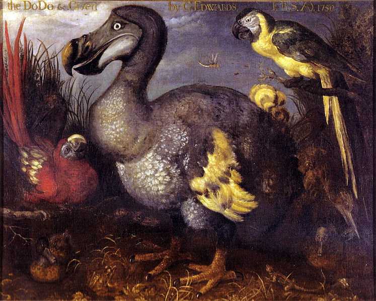 George Edward's Dodo painting