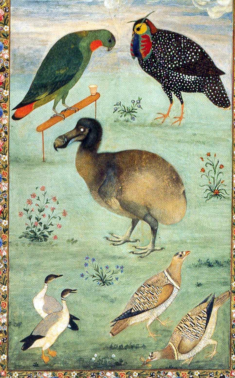 accurate dodo depiction Mughal Ustad Mansur India
