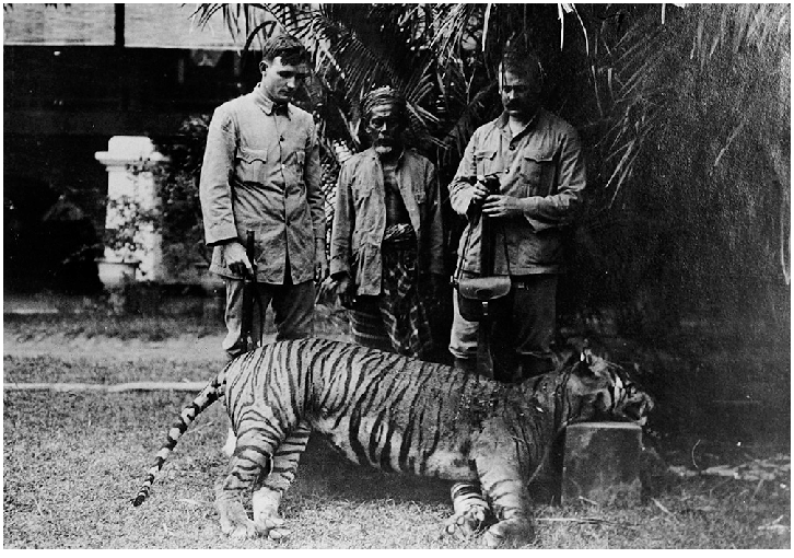 Balinese tiger extinct killed shot hunting colonist dutch East-Indies