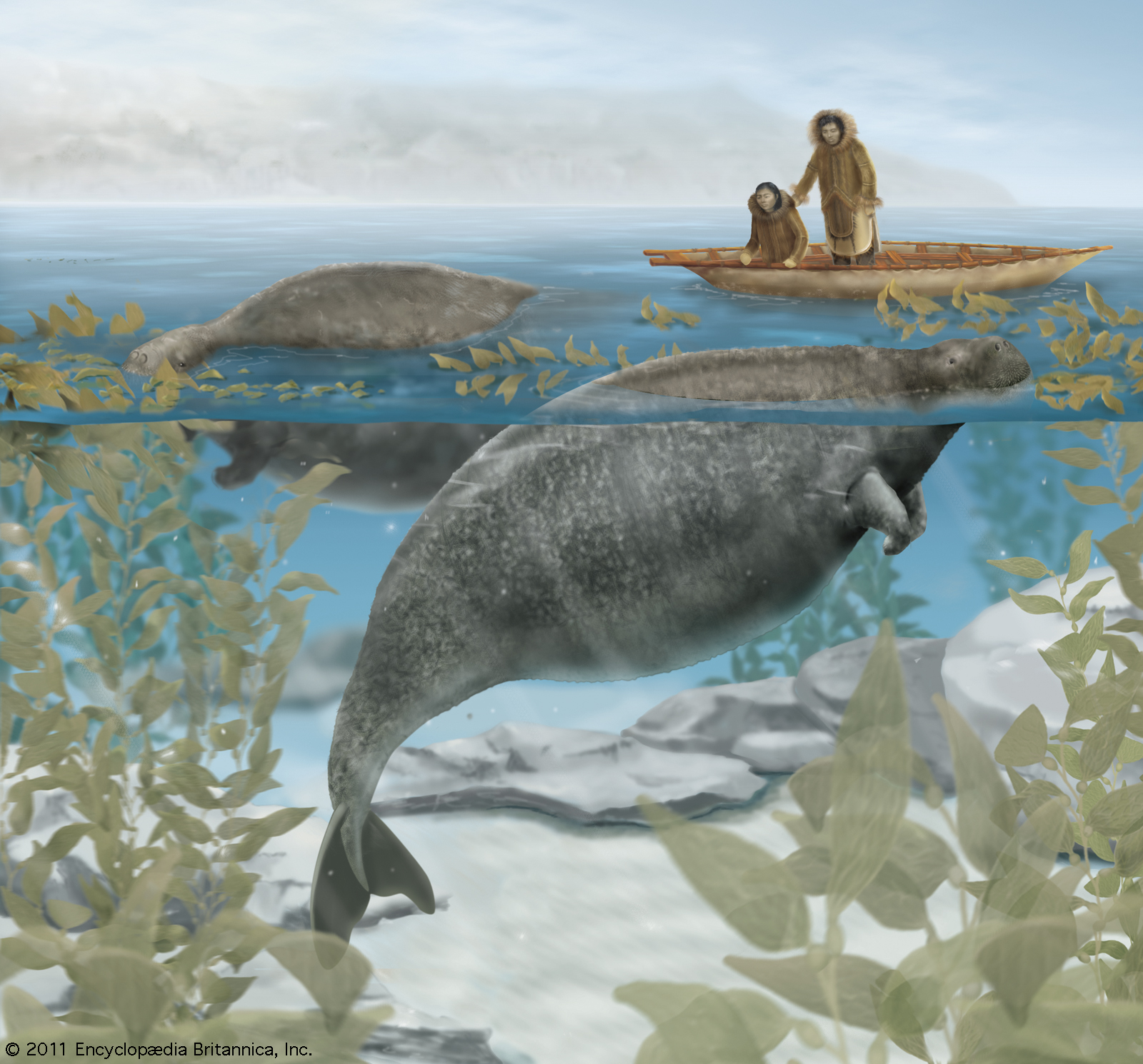 extinct steller's sea cow grazing kelp forest hunting