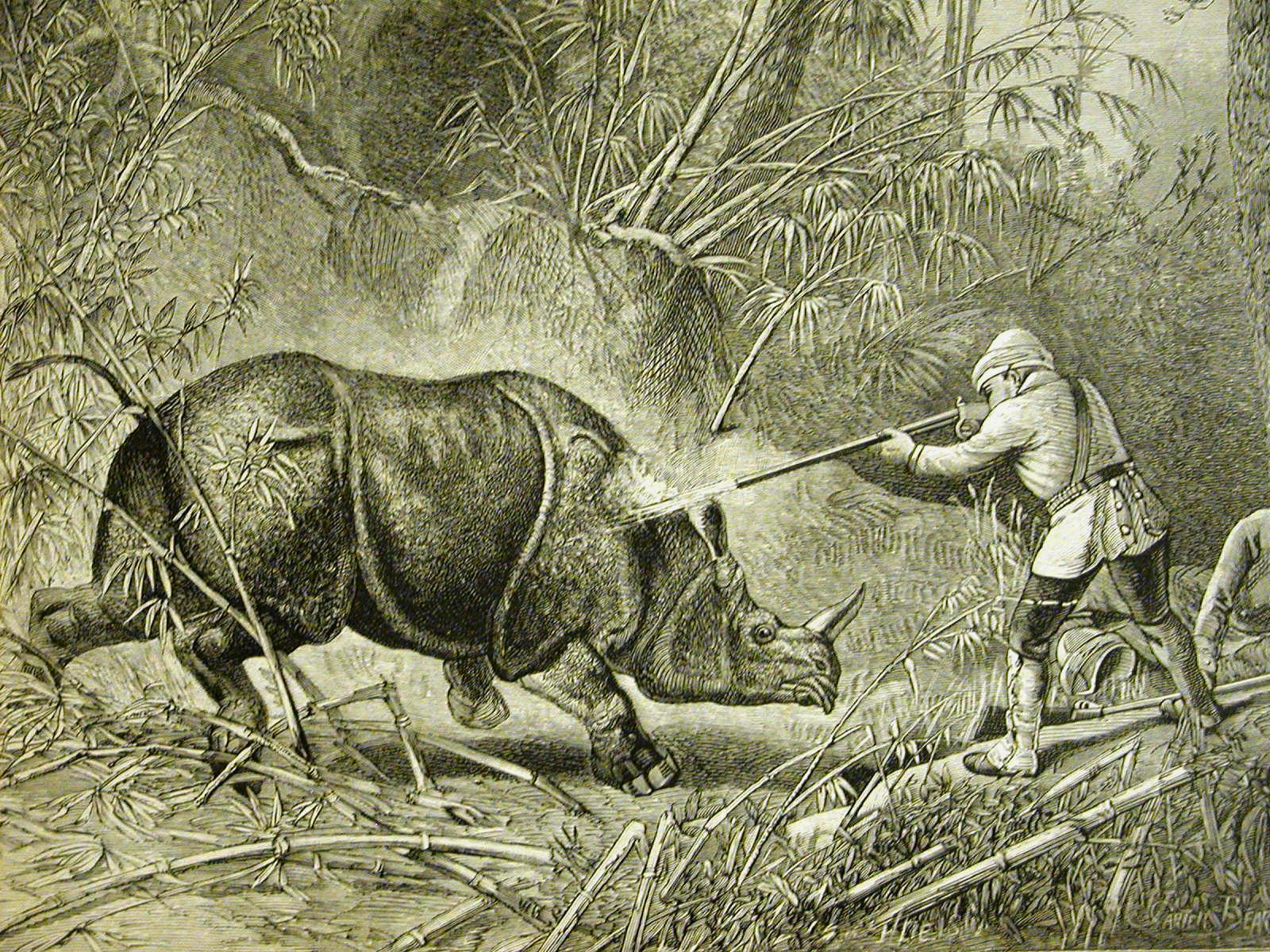 indian-greater-one-horned-rhino-hunting-engraving
