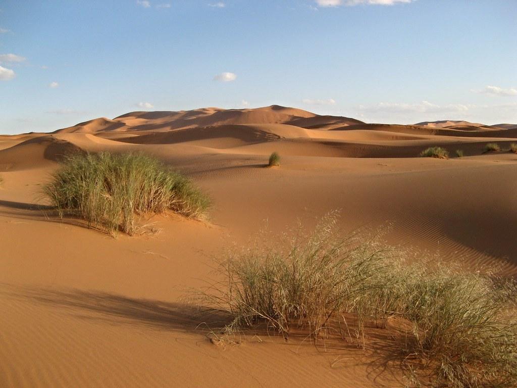 sand-dunes-desert-grasses-erg-Chebbi-Northern-Sahara-Marocco