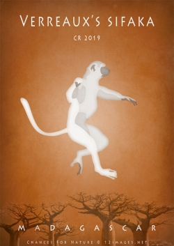 dancing-sifaka-Madagascar