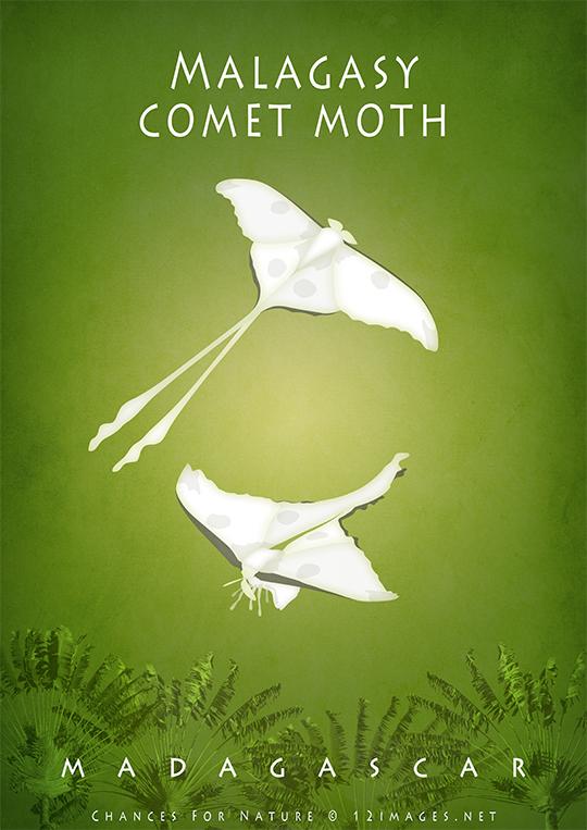 malagasy-comet-moth