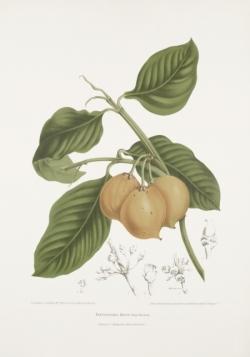 mundu-rata-maphuut-painting