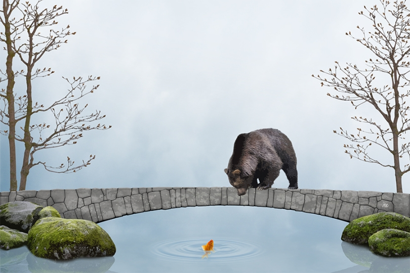 brown-bear-catching-goldfish-grizzly-three-wishes-river-