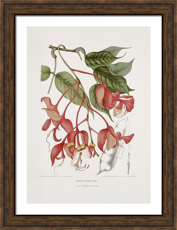 vintage-botanical-illustrations-orchid-tree-moira-risen