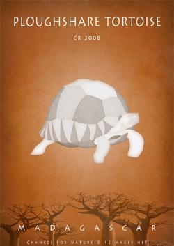 critically-endangered-tortoise-of-Madagascar