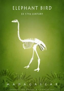 extinct-megafauna-of-Madagascar