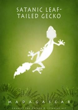 geckos-of-Madagascar