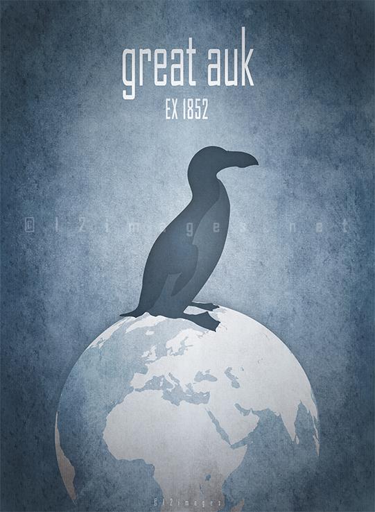 great auk Pinguinus impennis flightless bird extinct 19th century oceans North-Atlantic coastal waters Native Americans culture symbol