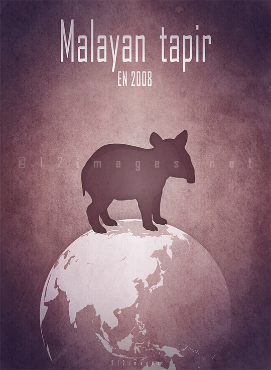 Malayan tapir Asian Indian tapir Tapirus indicus Southeast Asia tropical lowland rainforests endangered habitat deforestation human activity agriculture damming illegal trade
