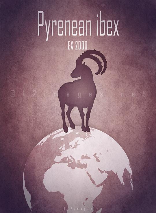 pyrenean ibex Diceros bicornis longipes Africa savanna Cameroon poaching rhino horn extinct IUCN red list poster