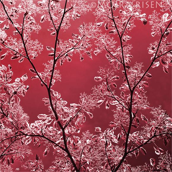 twigs frozen leaves winter purple fog mist winter spring
