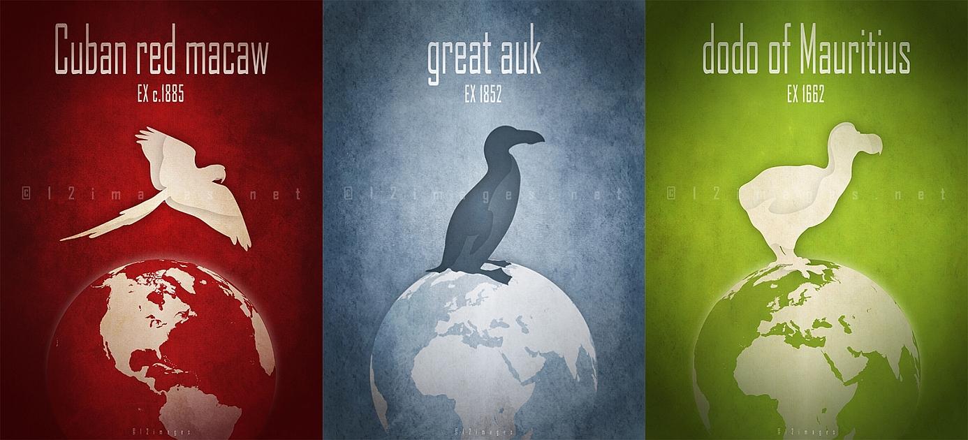 extinct bird species