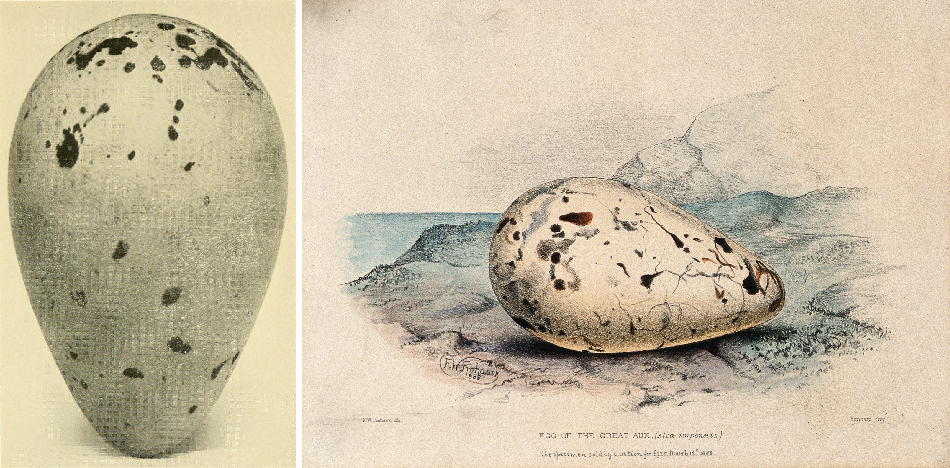 great-auk-eggs-photo-painting