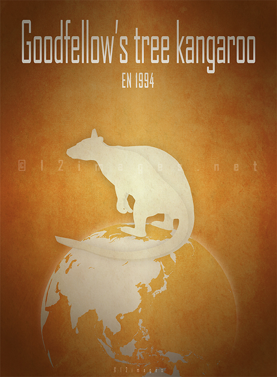 Goodfellows-tree-kangaroo-Dendrolagus-goodfellowi