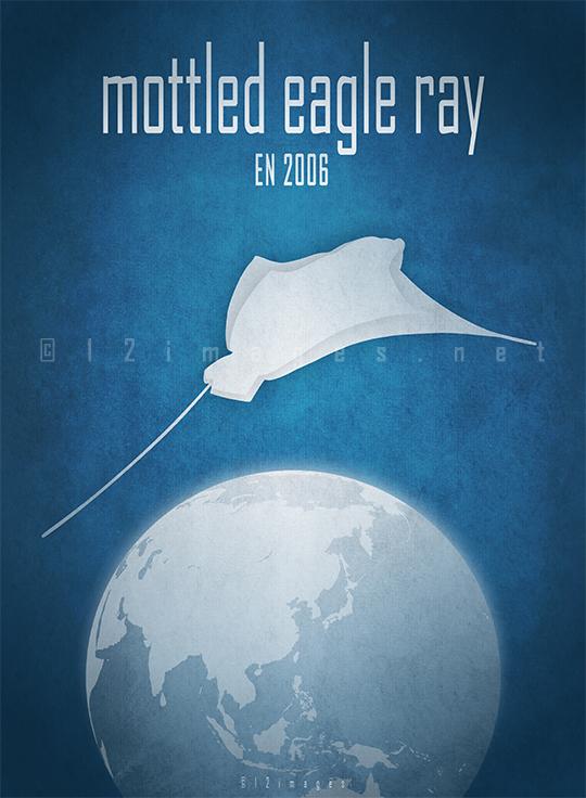 mottled-eagle-ray-Aetomylaeus-maculatus-