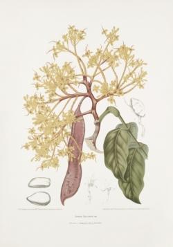 red-saraca-sorrowless-tree-painting