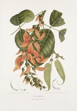 vintage-botanical-illustration-prints