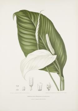 vintage-old-plant-prints