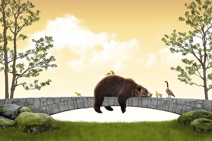 brown-bear-grizzly-kodiak-canadian-goose-geese-goslings-walking-road-block