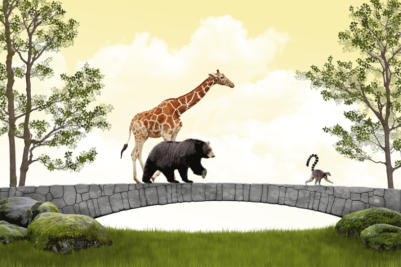 giraffe-black-bear-ring-tailed-lemur-circus-runaways-refugee