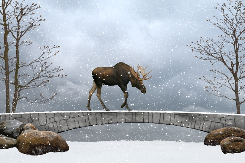 moose-walking-road-bridge-winter-snowfall-clouds