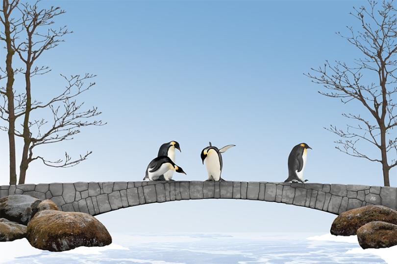 penguin-funny-frozen-lake-ice-walking-standing-cute-emperor-king